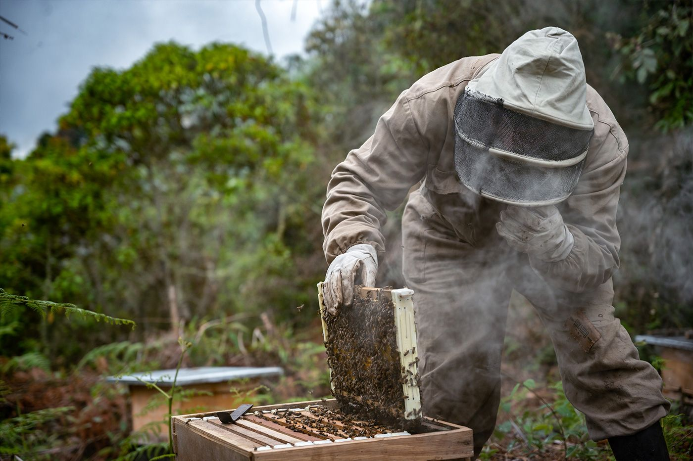 abejas_2